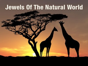Jewels of the Natural World