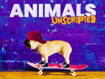 Animals Unscripted