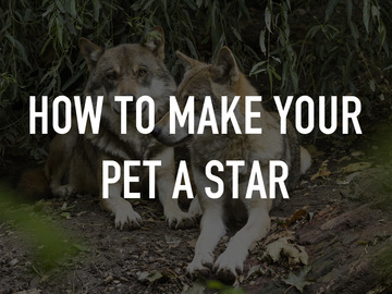 How to Make Your Pet a Star