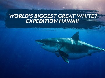 World's Biggest Great White? Expedition Hawaii