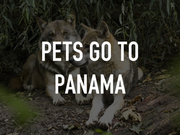 Pets Go to Panama