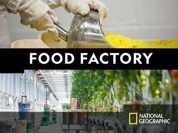 & DumplingsFood Factory